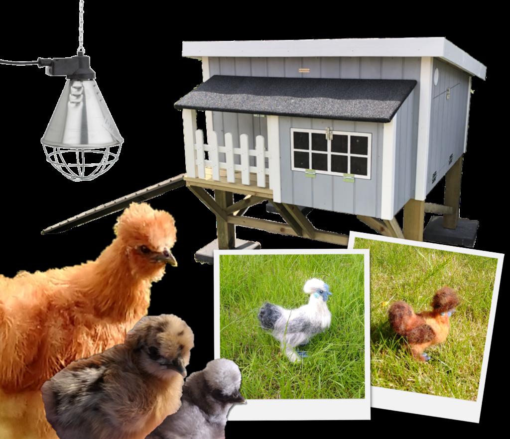 køb silkehøns, hønsehuse, tilbehør, merchandise
