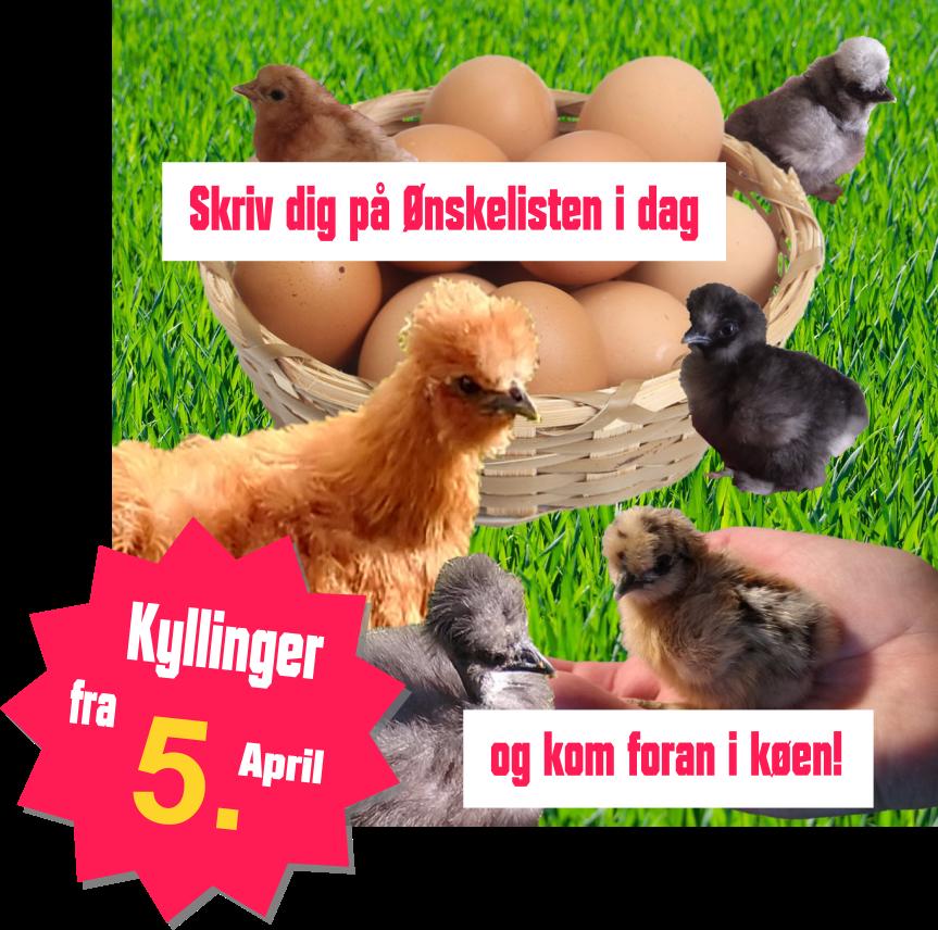 ønskelisten - kyllinger fra 5. april